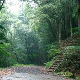 悠久の森遊歩道