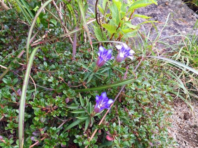 紫が綺麗なお花です