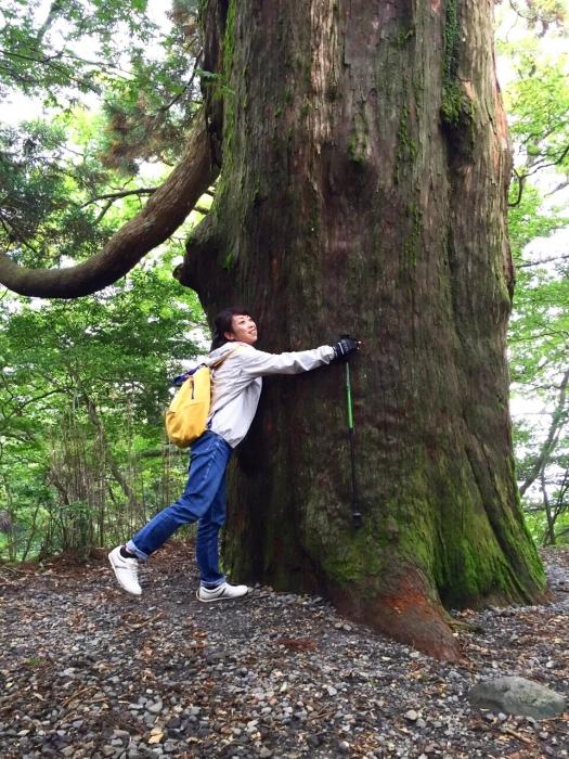 とっても大きな木!