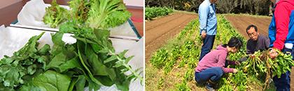 学校農園で収穫体験