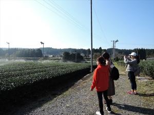お茶畑のスプリンクラーの水滴がキラキラ