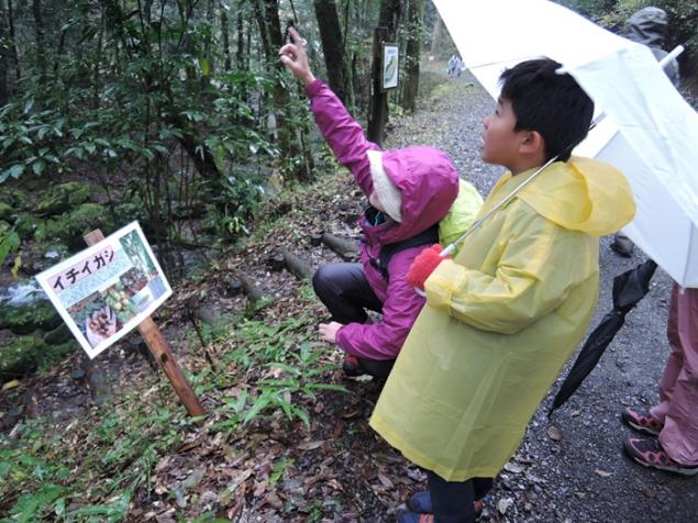雨に濡れた森林も神秘的な感じです