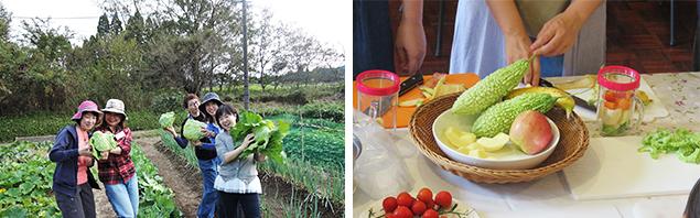 野菜収穫体験の様子写真